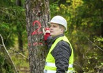 arboricultural surveys